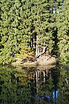 LSG GS 00059 Harz (LK Goslar) - Oberer Grumbacher Teich (2).jpg