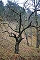LSG Sudmerberg - Bäume (2).jpg