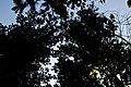 Lago di Massaciuccoli - le fronde degli alberi.jpg