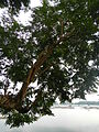 LakeSampalocjf7447 04.JPG
