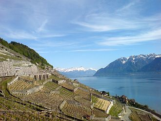 Lavaux - Image: Lake Geneva from Lavaux