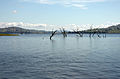 Lake Hume at 100 per cent in November 2010 (1).jpg