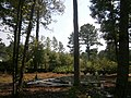 Lamar County, MS, USA - panoramio (5).jpg