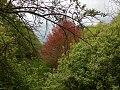 Landschaftsschutzgebiet Wäldchen bei Buer Melle Datei 2.jpg