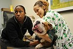 Langley Veterinary Clinic, Keeping our furry friends healthy 160317-F-TM985-051.jpg
