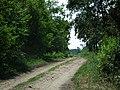 Lasy na północ od Podstolic (lasy nekielskie) (4).jpg