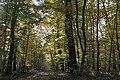 Le Poinçonnet (36) - Forêt domaniale de Châteauroux.jpg