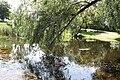 Leaning tree - panoramio.jpg