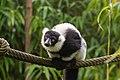 Lemur (23647860318).jpg