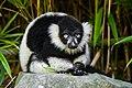 Lemur (36678658982).jpg