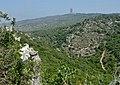Lilium candidum in Wadi Kelah 1.jpg