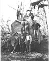Logging crew with spruce tree, Lester Logging Company, North River operation, ca 1915 (KINSEY 200).jpeg