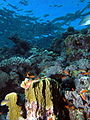 Looking up the reef - take 2 (6159008182).jpg