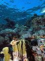 Looking up the reef - take 2 (6159008182).jpg