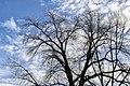 Lovely blue (47062509201).jpg