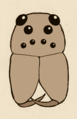 Lycosidae ojos.png