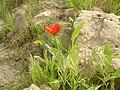 M.I.S Spring - panoramio.jpg