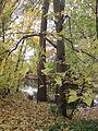 MSU 2014 Botanical Garden River M.jpg
