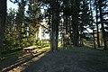 Maclean creek Kananaskis Alberta Canada (27725991786).jpg