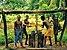 Making palm oil, DR Congo.jpg