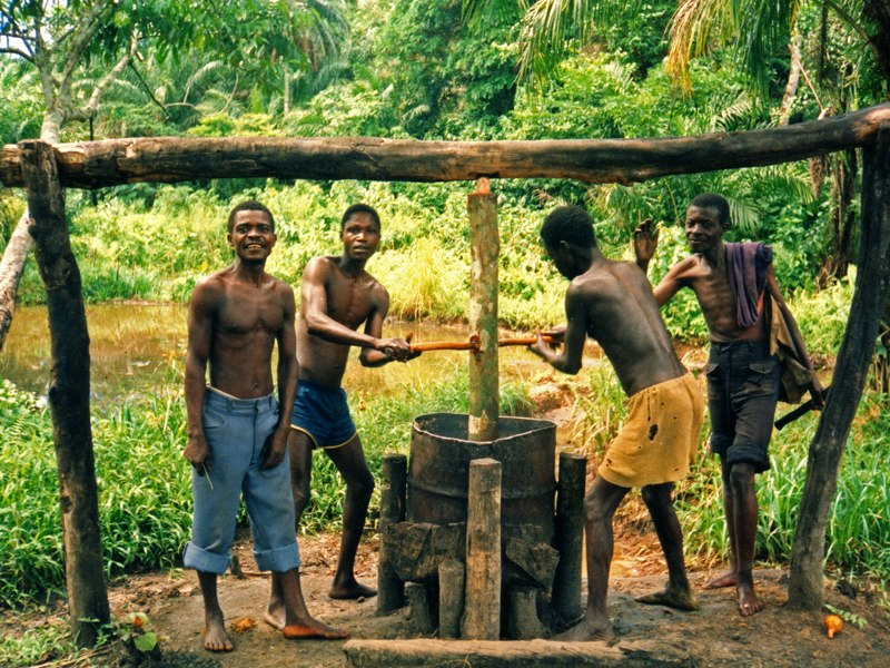 Making palm oil, DR Congo