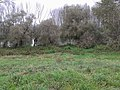 Maly dunaj - panoramio (18).jpg