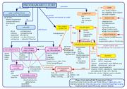 Mapa conceptual del programari lliure.png