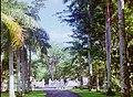 Mauritius.- Jardin botanique Sir Seewoosagur Ramgoolam (1).jpg