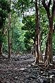 Mauritius 23.08.2009 07-48-56.jpg