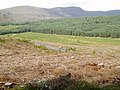 McAdam's Glen, Forrest Estate - geograph.org.uk - 515894.jpg