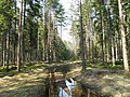 Meža ceļš - panoramio (3).jpg