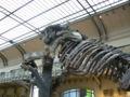 Megatherium americanum side.JPG