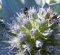 Meravigliosa flora con ospite.jpg