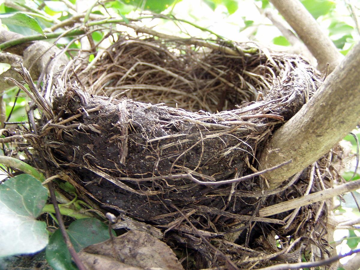 hoe maken vogels een nest