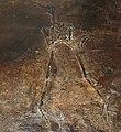 Messelornis cristata 32.jpg
