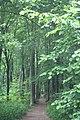Micheldever Wood - geograph.org.uk - 17844.jpg