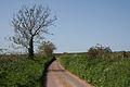 Milverton, near Luckham Farm - geograph.org.uk - 159219.jpg
