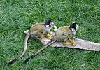 Monkeys July 2015-1.jpg