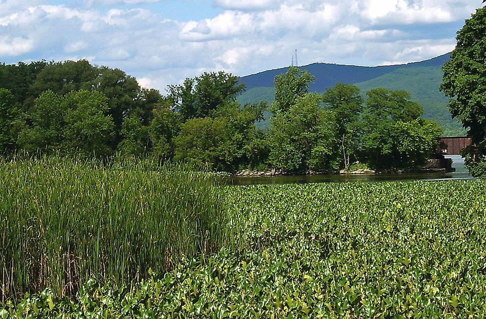 Moodna Creek tidal marsh