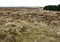 Moorland at Collin Hags - geograph.org.uk - 742148.jpg