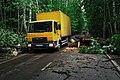 Moscow, Losiny Ostrov park, fallen tree on Yauzskaya Alley (31409981851).jpg