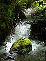 Munson Creek - Munson Creek Falls SNS Oregon.jpg