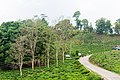 Nabin chwok Chiyabari-Ilam-IMG 6587.jpg