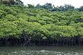 Nakama River Iriomote Okinawa Japan03s3.jpg