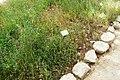 National Botanic Garden of Israel 32.jpg