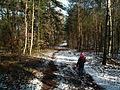 Natural reserve Zlota Gora, Konin (2).JPG