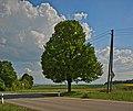 Naturdenkmal Linde in den Schloßwiesen, Nebringer Straße, Jettingen-Sindlingen, Kennung 81150530009, von Norden.jpg