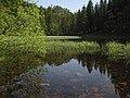 Nature Scene.jpg