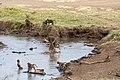 Nature of Ngorongoro Conservation Area (114).jpg
