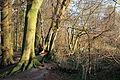 Naturschutzgebiet ST-094, Am Bagno-Buchenberg.dec2014.2.JPG